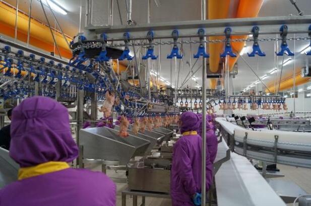 Has Tavuk koronavirüs krizinde bile çalışan sayısını arttırdı..!